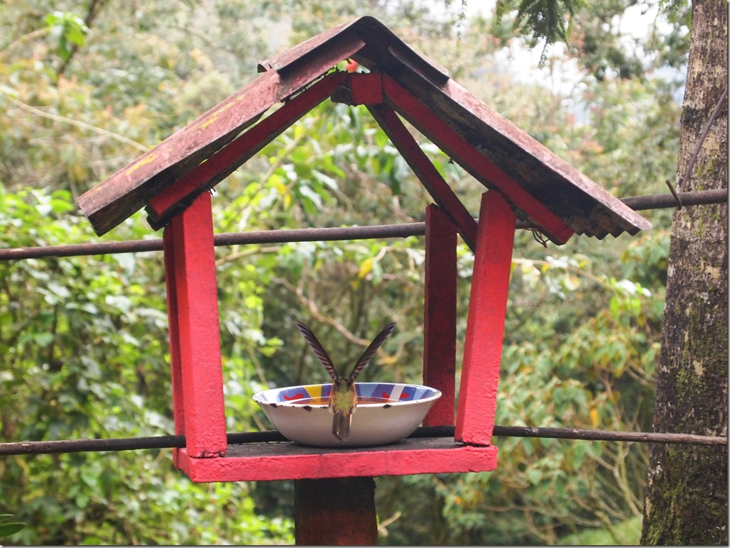 Hummingbird sanctuary Colombia