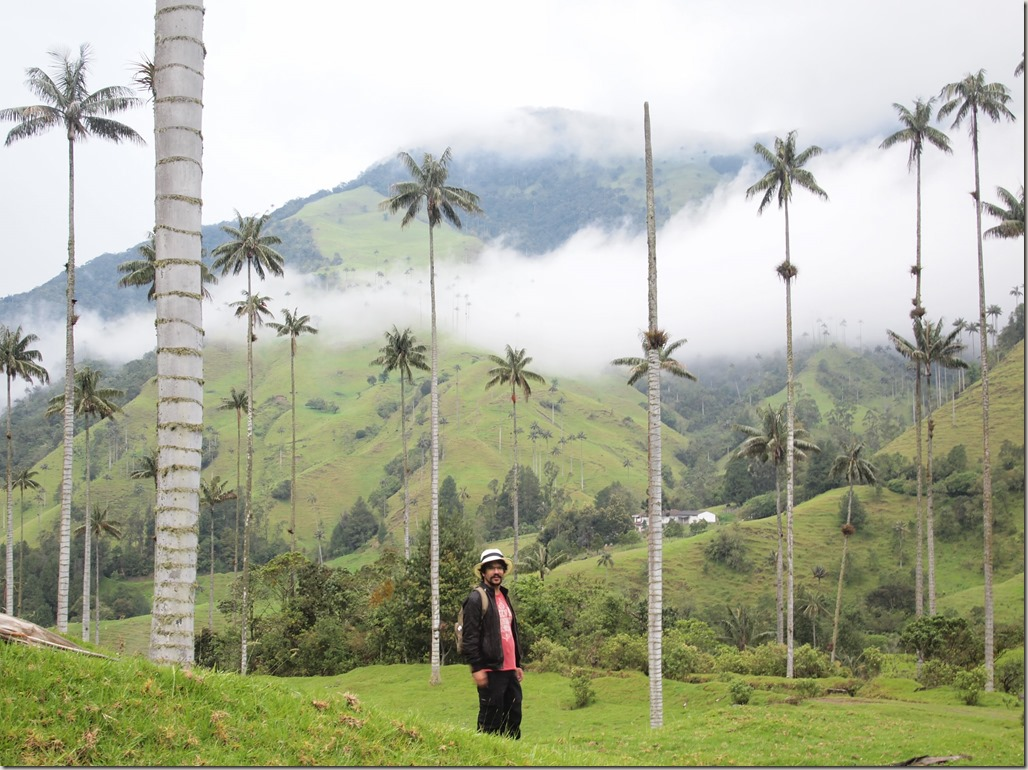 World's tallest palm trees