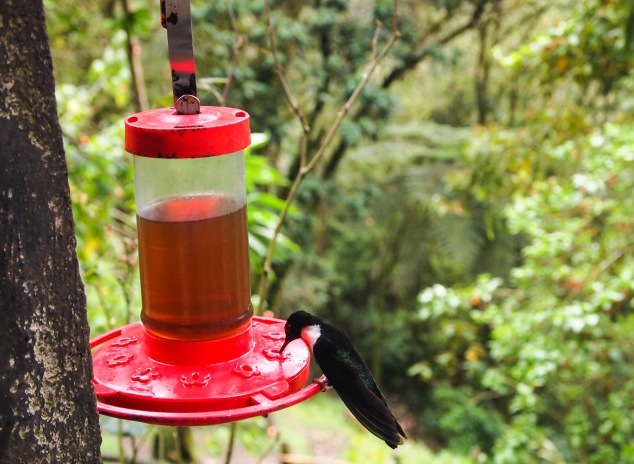 hummingbird sanctuary