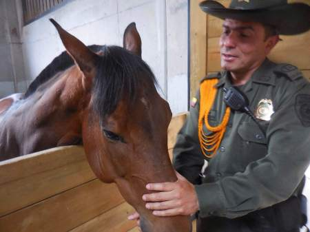 Police horse Colombia