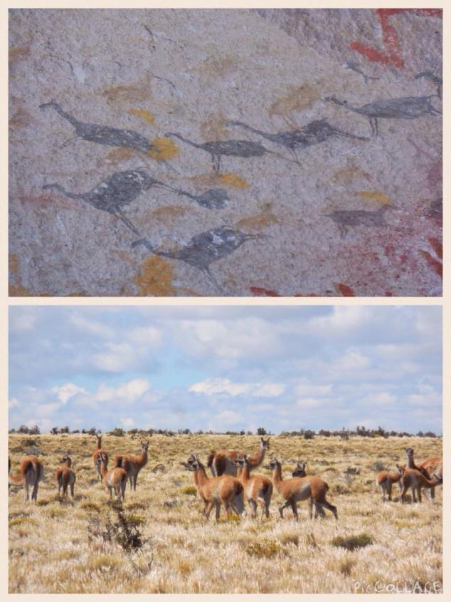 Guanacos: Giving zero fucks since 7300 BC